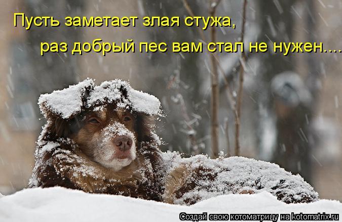 Котоматрица: Пусть заметает злая стужа,  раз добрый пес вам стал не нужен....