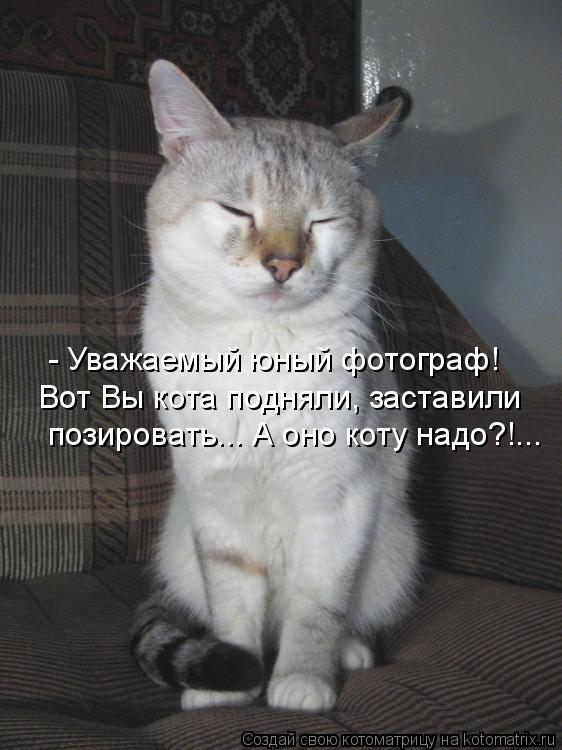 - Уважаемый юный фотограф! Вот Вы кота подняли, заставили позировать.