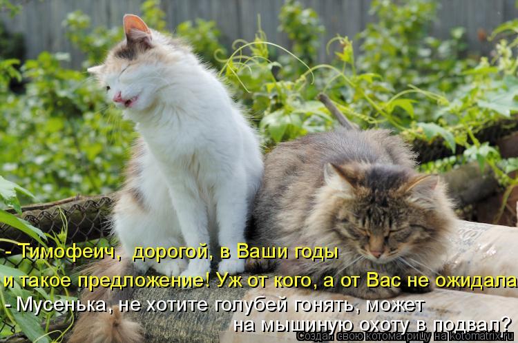 Котоматрица: - Мусенька, не хотите голубей гонять, может  на мышиную охоту в подвал? и такое предложение! Уж от кого, а от Вас не ожидала - Тимофеич,  дорогой