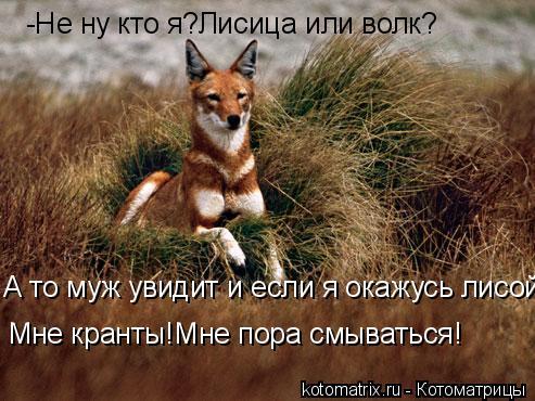 Стих ты как лисичка