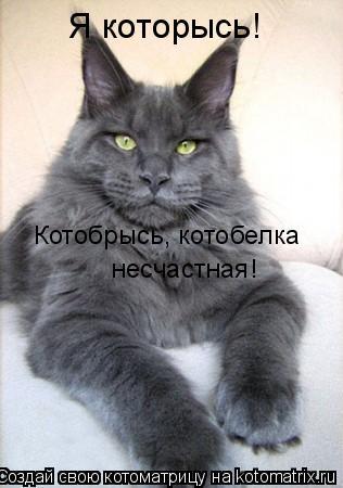 Котоматрица: Котобрысь, котобелка  несчастная! Я которысь!