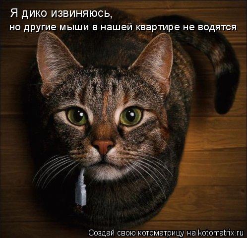Котоматрица: Я дико извиняюсь, но другие мыши в нашей квартире не водятся