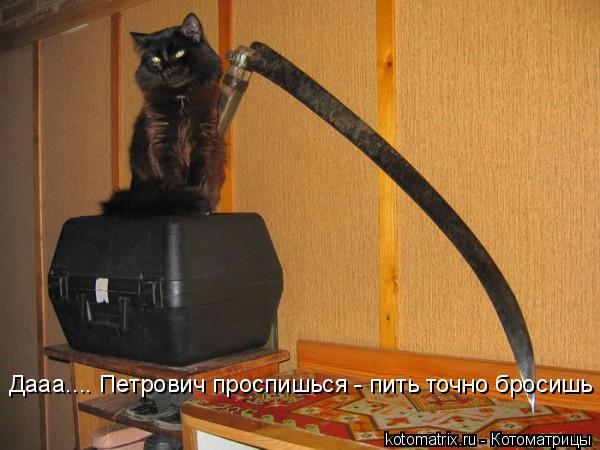 Котоматрица: Дааа.... Петрович проспишься - пить точно бросишь