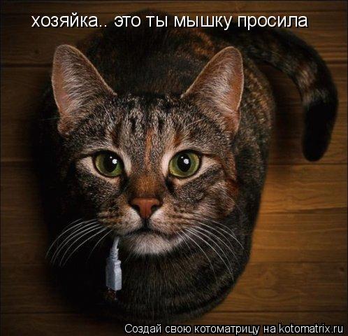 Котоматрица: хозяйка.. это ты мышку просила