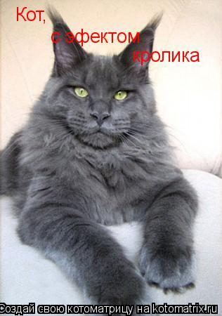 Котоматрица: Кот, с эфектом  кролика