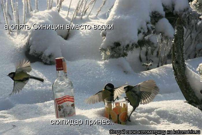 Котоматрица: а опять Синицин вместо водки  скипидар принес..