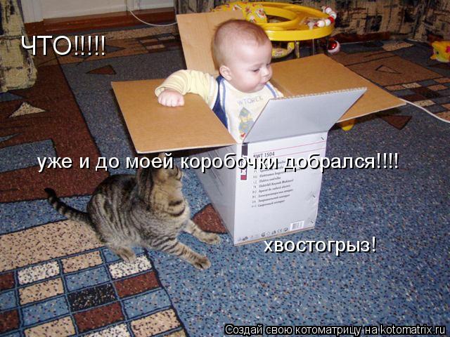 Котоматрица: ЧТО!!!!! уже и до моей коробочки добрался!!!! хвостогрыз!