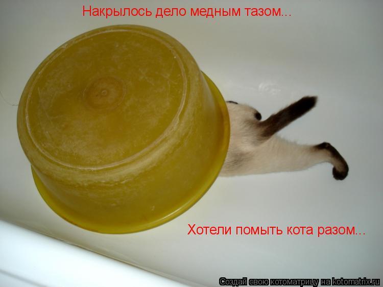Котоматрица: Накрылось дело медным тазом... Хотели помыть кота разом...