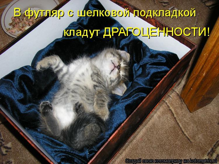 Котоматрица - В футляр с шелковой подкладкой кладут ДРАГОЦЕННОСТИ!