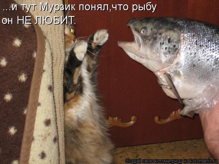 Котоматрица: ...и тут Мурзик понял,что рыбу он НЕ ЛЮБИТ.