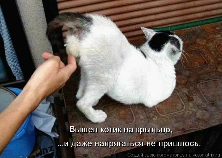 Котоматрица: Вышел котик на крыльцо, ...и даже напрягаться не пришлось.