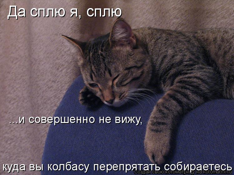 Котоматрица: Да сплю я, сплю Да сплю я, сплю ...и совершенно не вижу,  куда вы колбасу перепрятать собираетесь