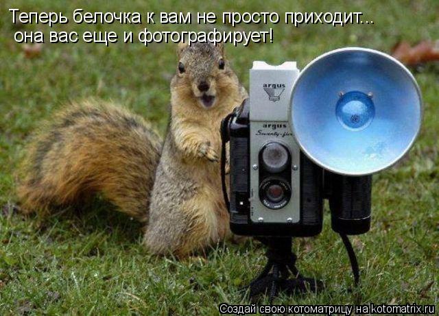 Котоматрица: Теперь белочка к вам не просто приходит... она вас еще и фотографирует!