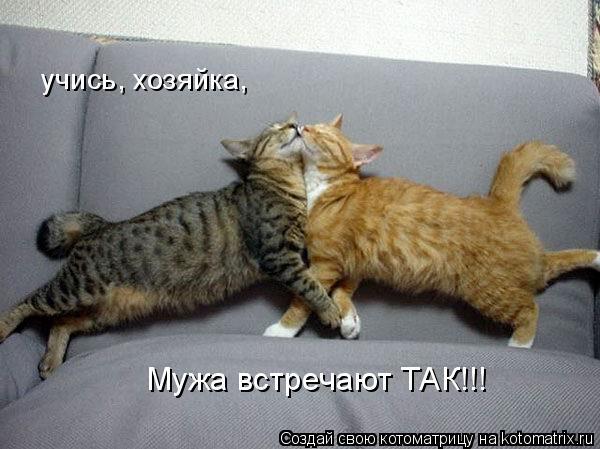 Котоматрица: учись, хозяйка, Мужа встречают ТАК!!!
