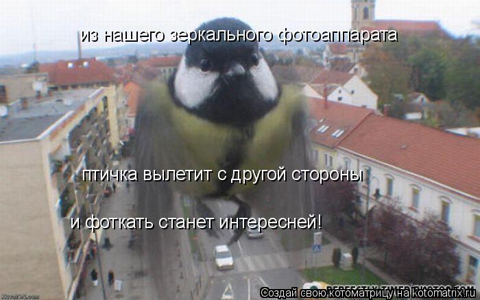 Котоматрица: из нашего зеркального фотоаппарата птичка вылетит с другой стороны и фоткать станет интересней!