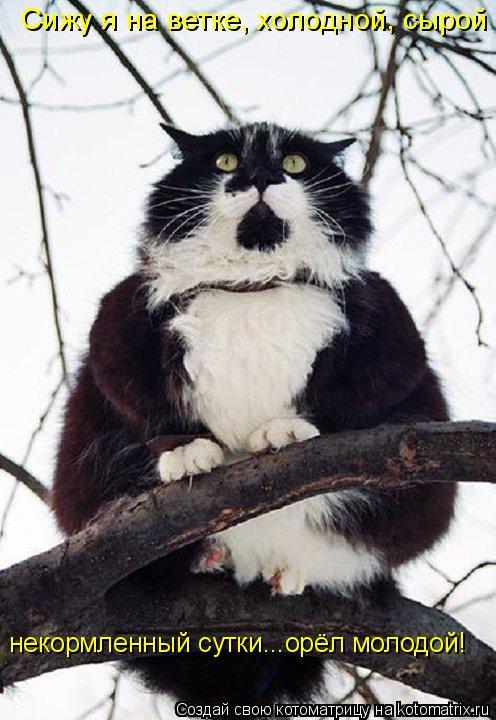 Котоматрица: Сижу я на ветке, холодной, сырой некормленный сутки...орёл молодой!