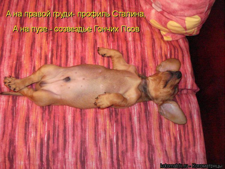 Котоматрица: А на правой груди- профиль Сталина,  А на пузе - созвездье Гончих Псов
