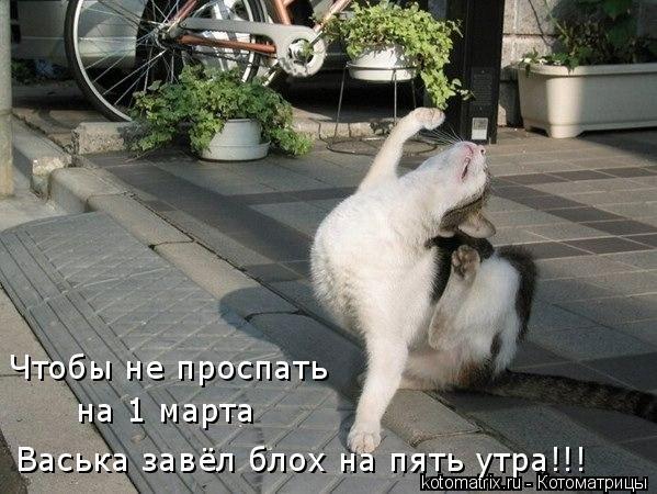 Котоматрица: Васька завёл блох на пять утра!!! Чтобы не проспать  на 1 марта