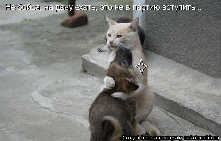 Котоматрица: Не бойся, на дачу ехать, это не в партию вступить... /\ < \/ >