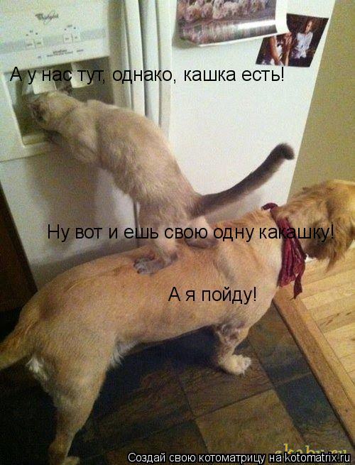 Котоматрица: А у нас тут, однако, кашка есть! Ну вот и ешь свою одну какашку! А я пойду!
