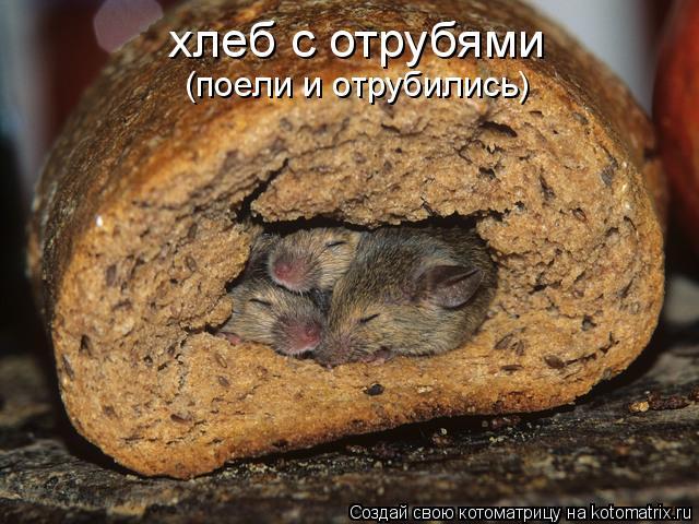 Котоматрица: хлеб с отрубями (поели и отрубились)