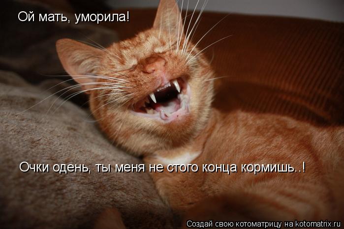 Котоматрица: Ой мать, уморила! Очки одень, ты меня не стого конца кормишь..!