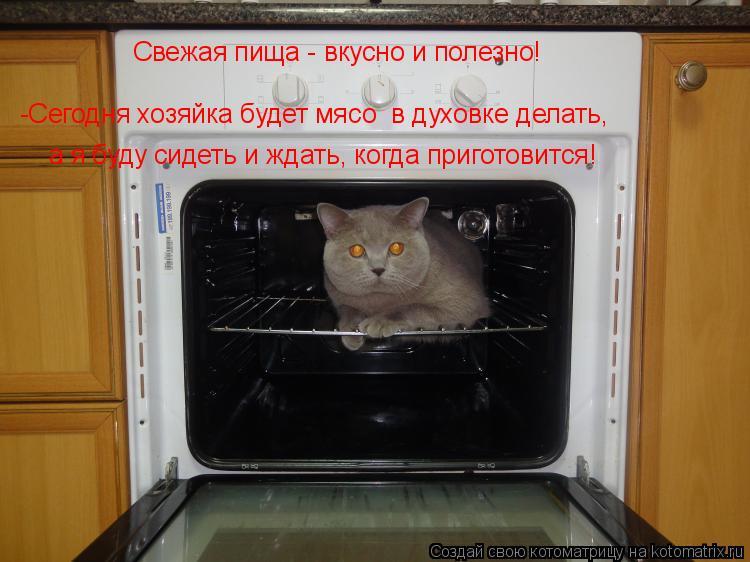 Котоматрица: Свежая пища - вкусно и полезно! -Сегодня хозяйка будет мясо  в духовке делать,  а я буду сидеть и ждать, когда приготовится!