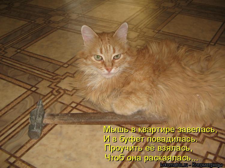 Котоматрица: Мышь в квартире завелась, И в буфет повадилась. Проучить её взялась, Чтоб она раскаялась... Чтоб она раскаялась...