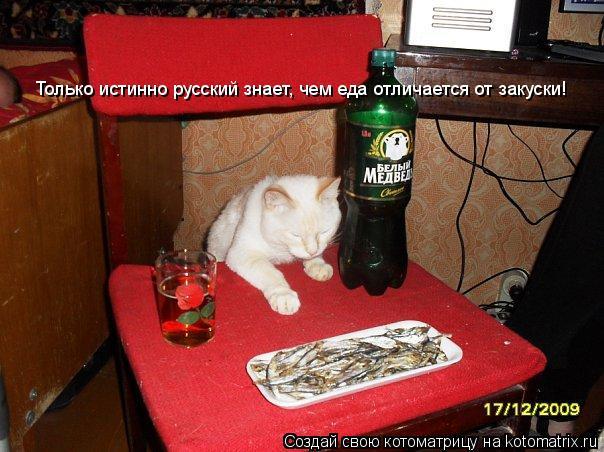 Котоматрица: Только истинно русский знает, чем еда отличается от закуски!
