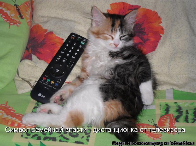 Котоматрица: Символ семейной власти - дистанционка от телевизора