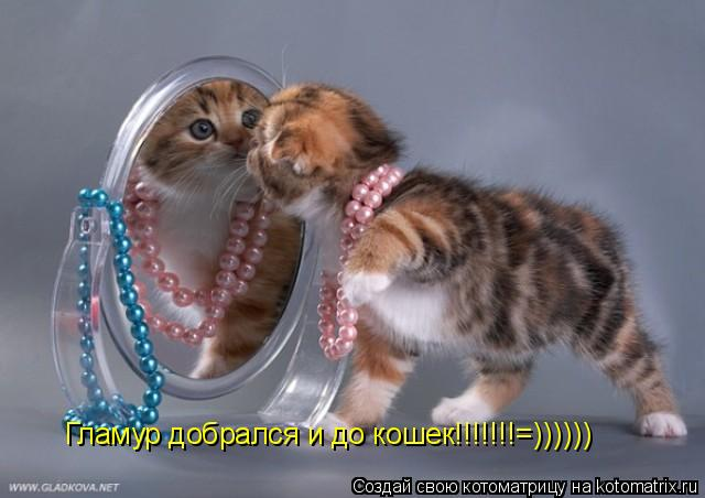 Котоматрица: Гламур добрался и до кошек!!!!!!!=))))))