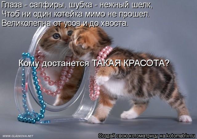 Котоматрица: Глаза - сапфиры, шубка - нежный шелк, Чтоб ни один котейка мимо не прошел. Великолепна от усов и до хвоста. Кому достанется ТАКАЯ КРАСОТА?