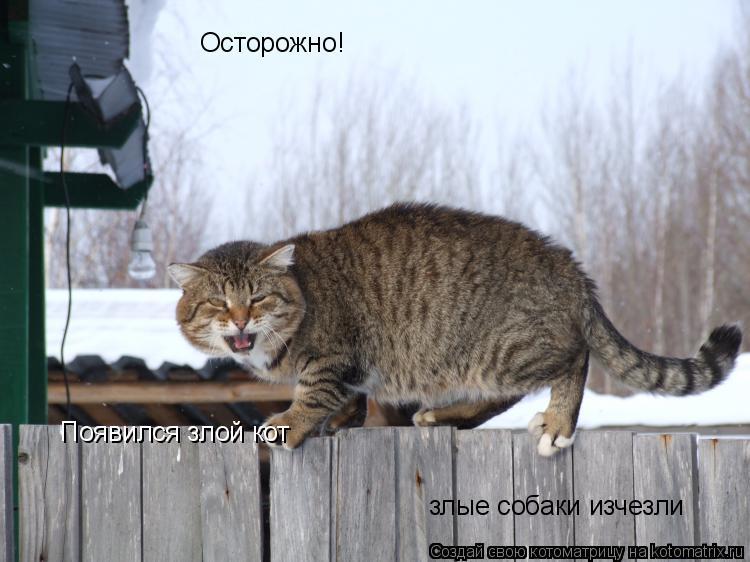 Котоматрица: Осторожно! Появился злой кот злые собаки изчезли