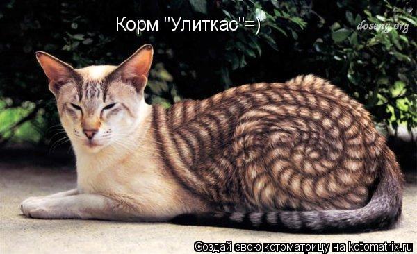 """Котоматрица: Корм """"Улиткас""""=)"""