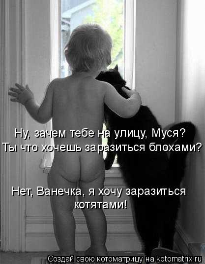 Котоматрица: Ну, зачем тебе на улицу, Муся? Ты что хочешь заразиться блохами? Нет, Ванечка, я хочу заразиться котятами!