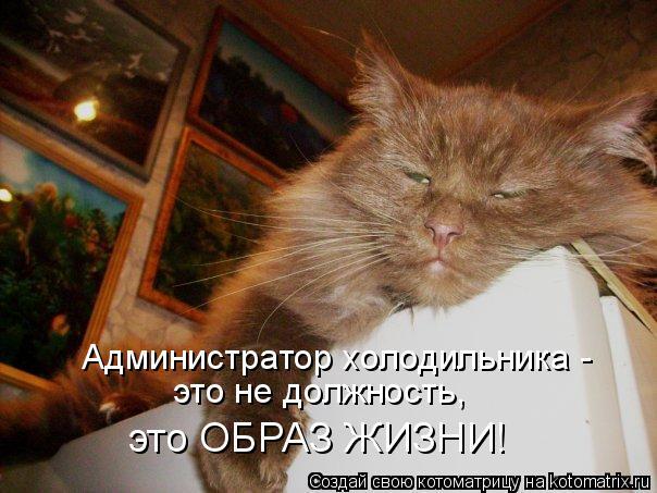 Администратор холодильника - это не должность, это ОБРАЗ ЖИЗНИ!
