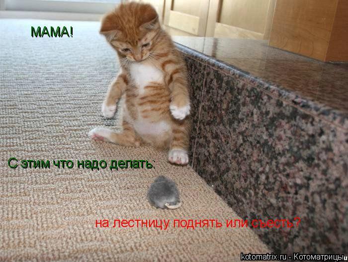 Котоматрица: МАМА! С этим что надо делать:  на лестницу поднять или съесть?