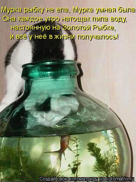 Мурка рыбку не ела, Мурка умная была: Она каждое утро натощак пила вод