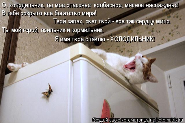Котоматрица: О, холодильник, ты мое спасенье: колбасное, мясное наслажднье! В тебе сокрыто все богатство мира!  Твой запах, свет твой - все так сердцу мило.