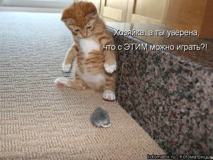 Котоматрица: Хозяйка, а ты уверена,  что с ЭТИМ можно играть?!