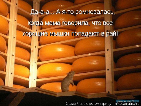 Котоматрица: Да-а-а... А я-то сомневалась,  когда мама говорила, что все  хорошие мышки попадают в рай!