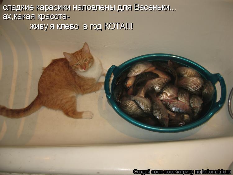 Котоматрица: сладкие карасики наловлены для Васеньки... ах,какая красота- живу я клево  в год КОТА!!!