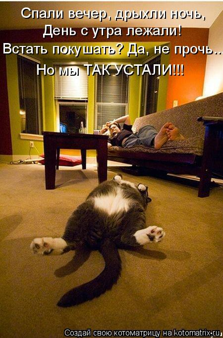 Спали вечер, дрыхли ночь, День с утра лежали! Встать покушать? Да, не
