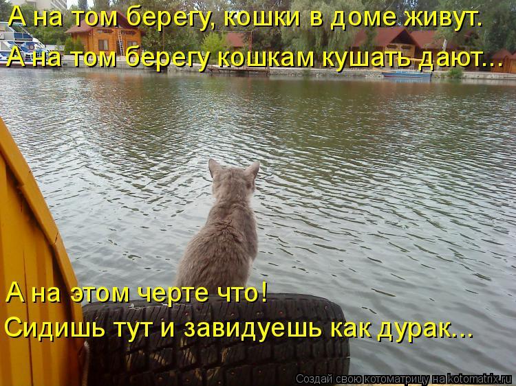 Котоматрица: А на том берегу, кошки в доме живут. А на том берегу кошкам кушать дают... А на этом черте что! Сидишь тут и завидуешь как дурак...