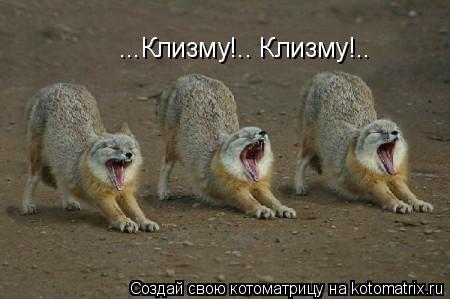Котоматрица: ...Клизму!.. Клизму!..