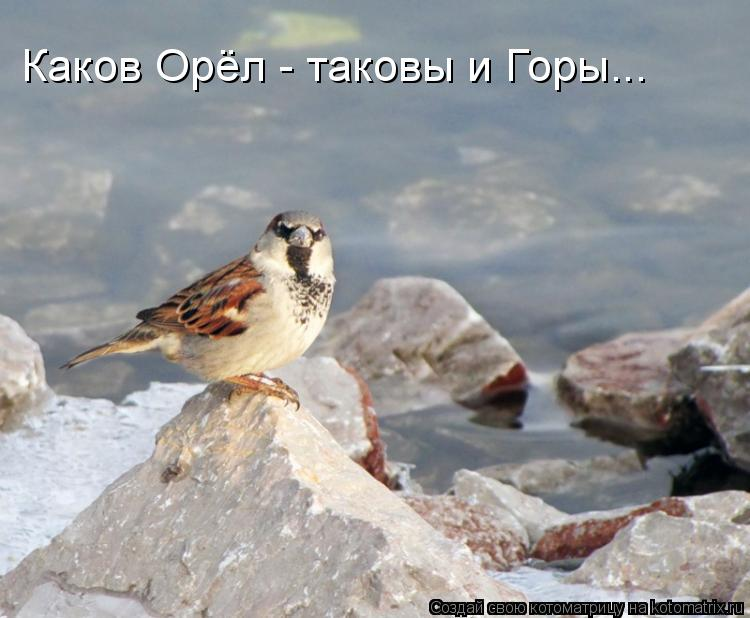 Котоматрица: Каков Орёл - таковы и Горы...