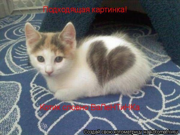 Котоматрица: Подходящая картинка! Котик словно ВаЛеНТиНКа