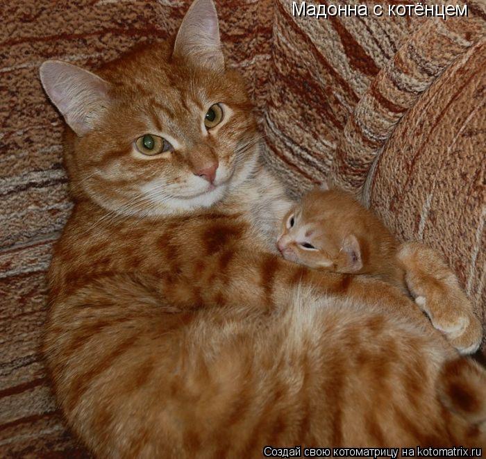 Котоматрица: Мадонна с котёнцем