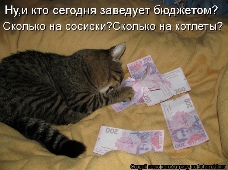 Котоматрица: Ну,и кто сегодня заведует бюджетом? Сколько на сосиски?Сколько на котлеты?
