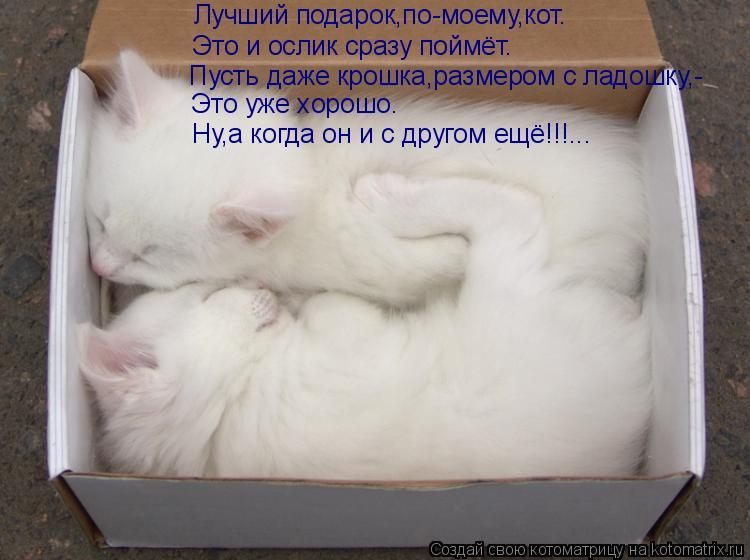 Котоматрица: Лучший подарок,по-моему,кот. Это и ослик сразу поймёт. Пусть даже крошка,размером с ладошку,- Это уже хорошо. Ну,а когда он и с другом ещё!!!...